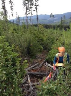 Karen McCloskey surveying the growing trees