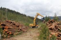 Processing Logs