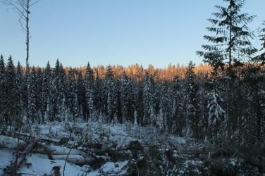 Winter Harvesting