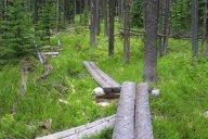 JCP trail maintenance